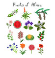 plants of africa vector image