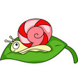 red candy snail vector image vector image
