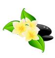 spa flower symbol vector image