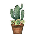 watercolor composition of cacti and vector image vector image