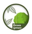 green lettuce vegetable fresh healthy label vector image