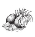coconut and coconut shavings hand drawn sketches vector image