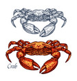 crab seafood isolated sketch icon vector image vector image