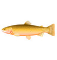cutthroat trout fish vector image vector image
