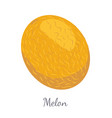 melon exotic juicy stone fruit isolated vector image vector image
