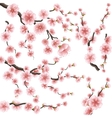 set sakura japan cherry branch eps 10 vector image