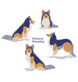 shetland sheepdog vector image