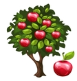 Apple tree with ripe fruits in cartoon style vector image