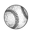 baseball ball sketch vector image