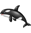 cartoon orca isolated on white background vector image vector image