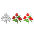 anthurium flower with leaves black engraving vector image