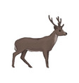 elk wild northern forest animal vector image