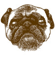 engraving antique pug dog head vector image