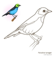 Paradise tanager color book vector image vector image