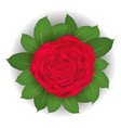 red rose and leaf on white background vector image