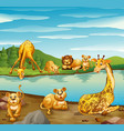 scene with giraffes and lions by the river vector image vector image