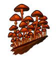 mushroom honey agaric vector image
