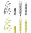grain vector image