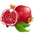Ripe pomegranates with leaves isolated on a white vector image