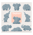 Set of Elephant family vector image vector image