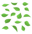 set spring fresh green leaves vector image vector image
