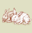 sketch of the rabbits vector image