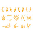 wheat wreaths and grain spikes set icons vector image