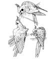 parrots three vector image