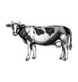 hand-sketched cow graphic hand-drawn sketch retro vector image