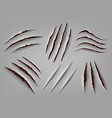 realistic animal claw scratch wild animal or vector image