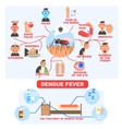 Dengue Fever Infographics vector image