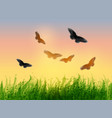 landscape with grass sunrise sky and butterflies vector image vector image