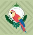parrot exotic bird vector image vector image