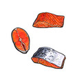 sea red salmon fish meat fillet set vector image