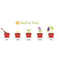 seed to fruit vector image