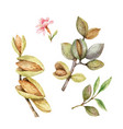 watercolor set fruits and leaves vector image