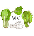 green salad isolated on white background vector image vector image