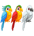 Parrots vector image vector image