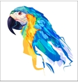 The cute parrot head vector image vector image