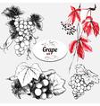 Grape set vector image