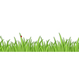 grass isolated vector image vector image