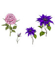 set with clematis and rose flowers vector image vector image