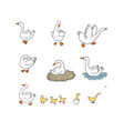 set with goose and ducks nest and eggs farm vector image