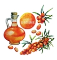 Watercolor sea buckthorn oil jar and berries vector image
