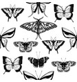 backdrop with high detailed insects sketches hand vector image vector image
