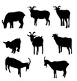 Goat silhouette vector image