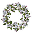 apple blossom round frame vector image