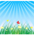 summer spring nature background grass butterflies vector image