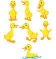 cartoon baby duck collection set vector image vector image