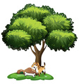 Dog under tree vector image vector image